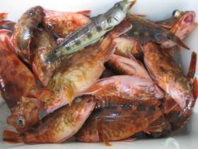 スタッフ自ら海に出て釣りあげています。月、火曜日は釣果次第で釣りたての魚があるかも・・・。