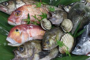 福岡魚市場から直送した鮮度バツグンの魚介