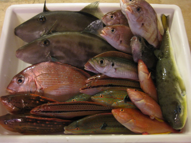 スタッフ自ら仕入れ釣行実施中!!どこよりも新鮮、昼過ぎまで海を泳いでいた魚たちが夕方にはお皿の上に!