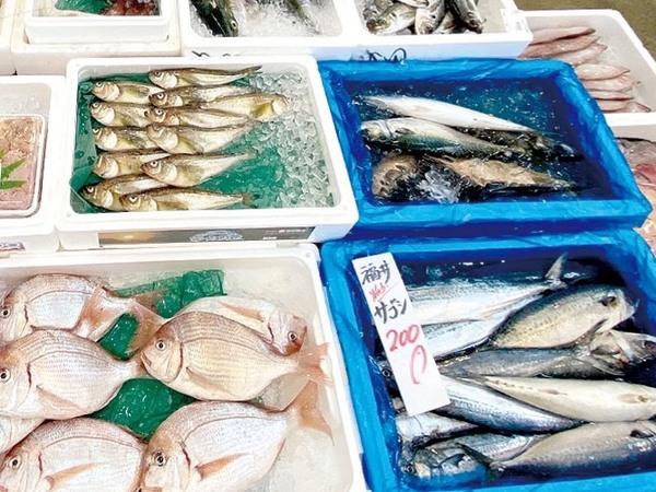 各種 鮮魚